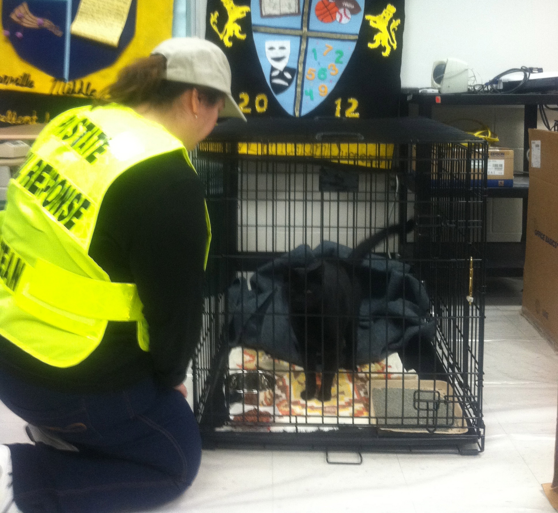 A member of the CART team tends to a cat at the shelter set up at Lionville Middle School.