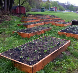 The addition of new raised beds is expected to more than quadruple production for the Mogreena Garden Project.