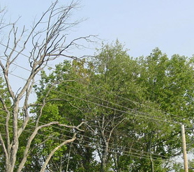 Peco said crews began working on pruning and selective tree removal in mid-August and will continue until