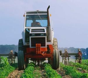 Farm-300x266.jpg