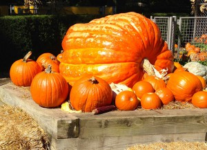 pumpkin-image-300x217.jpg
