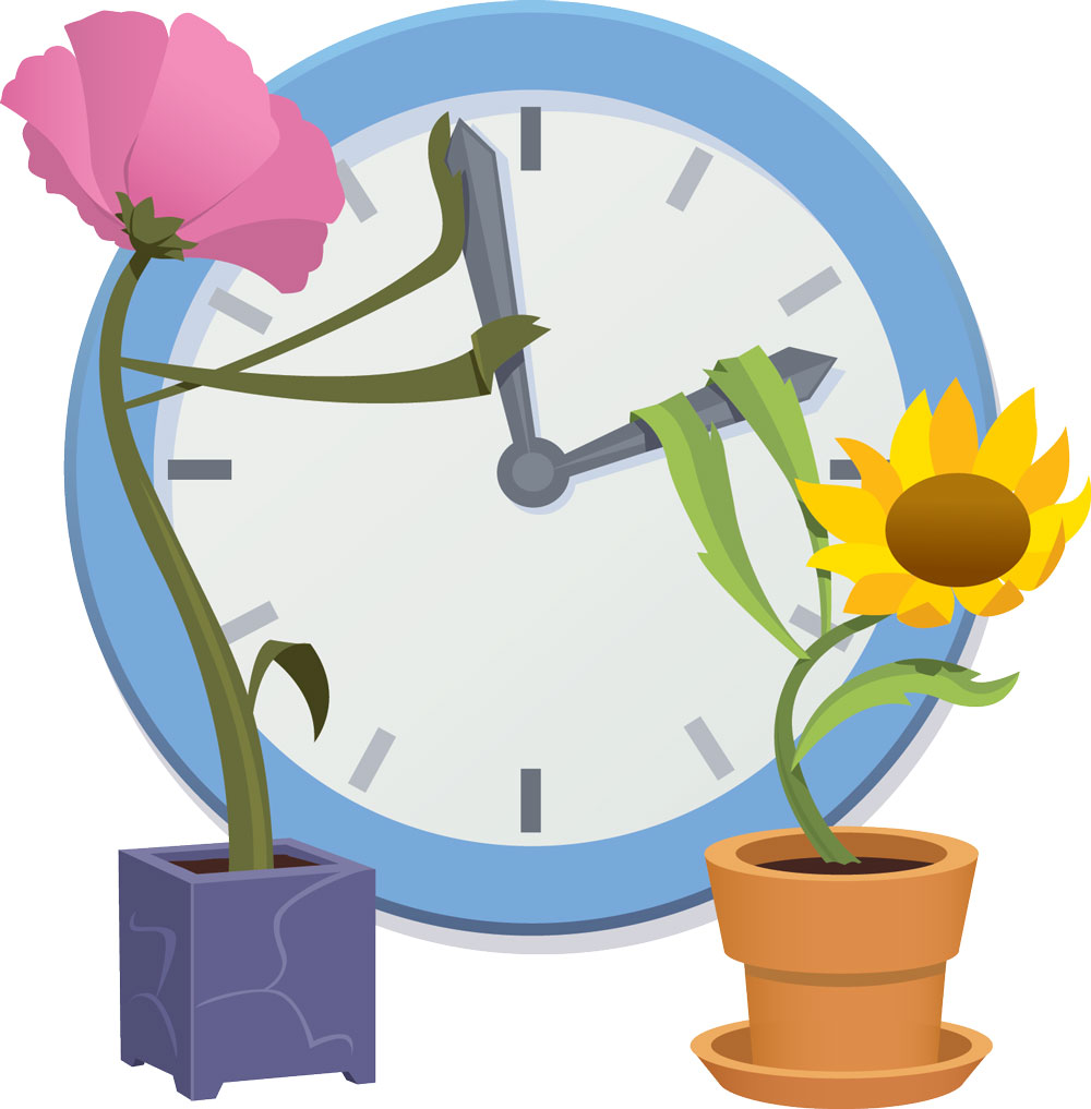 Spring Your Clocks Forward this Weekend for Daylight Saving Time