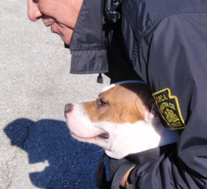 Chester County Animal Protective Services Officer Craig Baxter holds Radar as an appreciative crowd admires the progress the dog has made since being discarded on the side of the road a year ago.