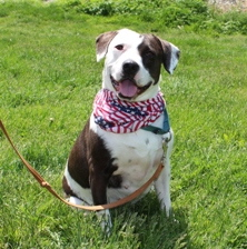 Sweetness is one of the female dogs looking for a permanent home, and Chester County SPCA officials say she's aptly named.