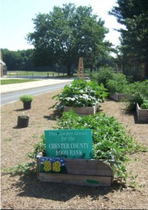 30 raised garden beds contain a variety of vegetables which are donated to the Chester County Food Bank and also used in the Family and Consumer Science classrooms.