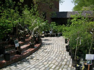 Wildflower, Native Plant and Seed Sale