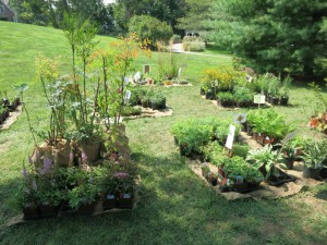 barclay friends garden tiur and plant sale