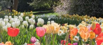 Spring Blooms longwood