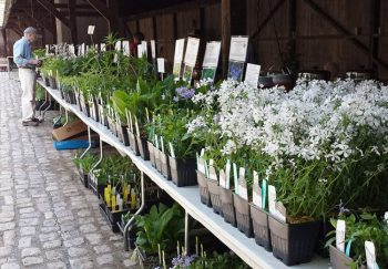 """The annual """"Wildflower, Native Plant & Seed Sale"""" is this weekend at the Brandywine River Museum."""