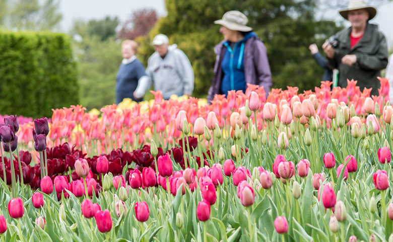 What To Do Longwood Gardens Blooms Into Spring The Unionville